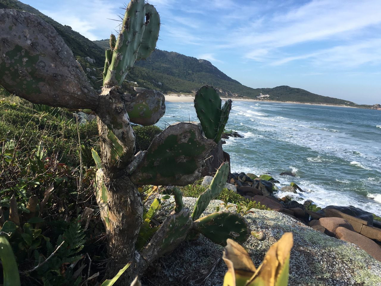Nature Rock - Object Water Outdoors Day Beauty In Nature Tranquil Scene Sea Scenics Tranquility No People Sky Mountain Close-up Cactus