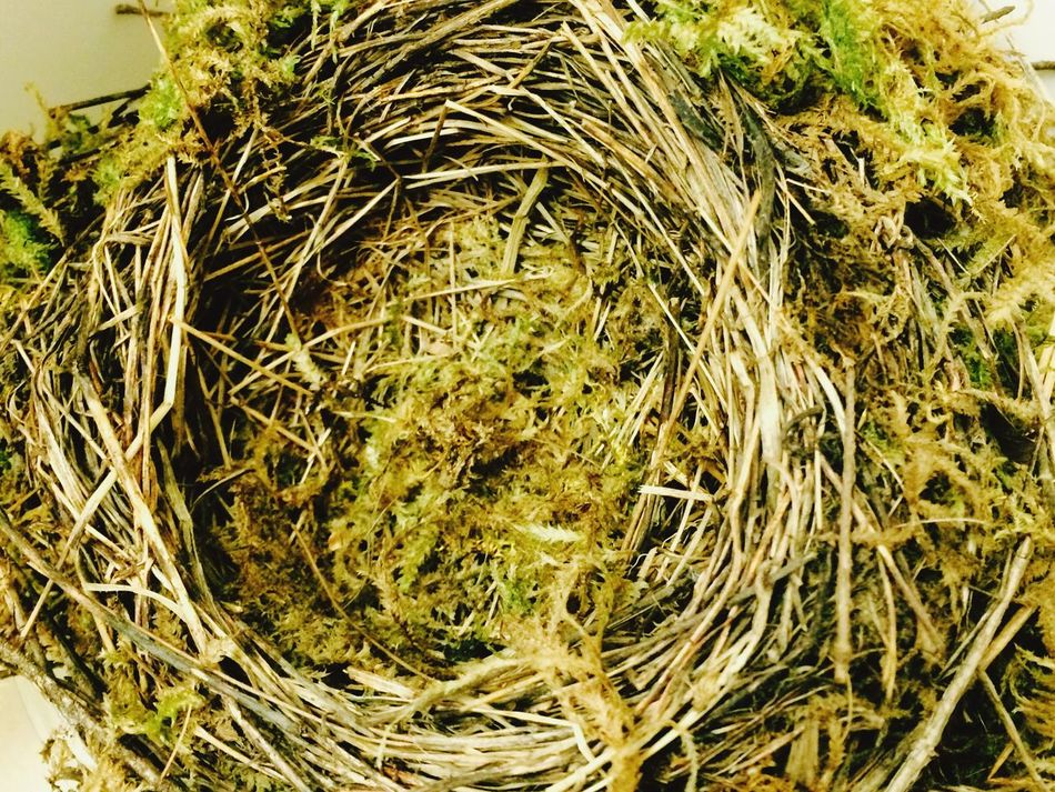 No People Birdnest Woven Pattern Woven Textures And Surfaces Texture natural materials Robin Nest Natural Pattern Natural Materials Green Color Still Life