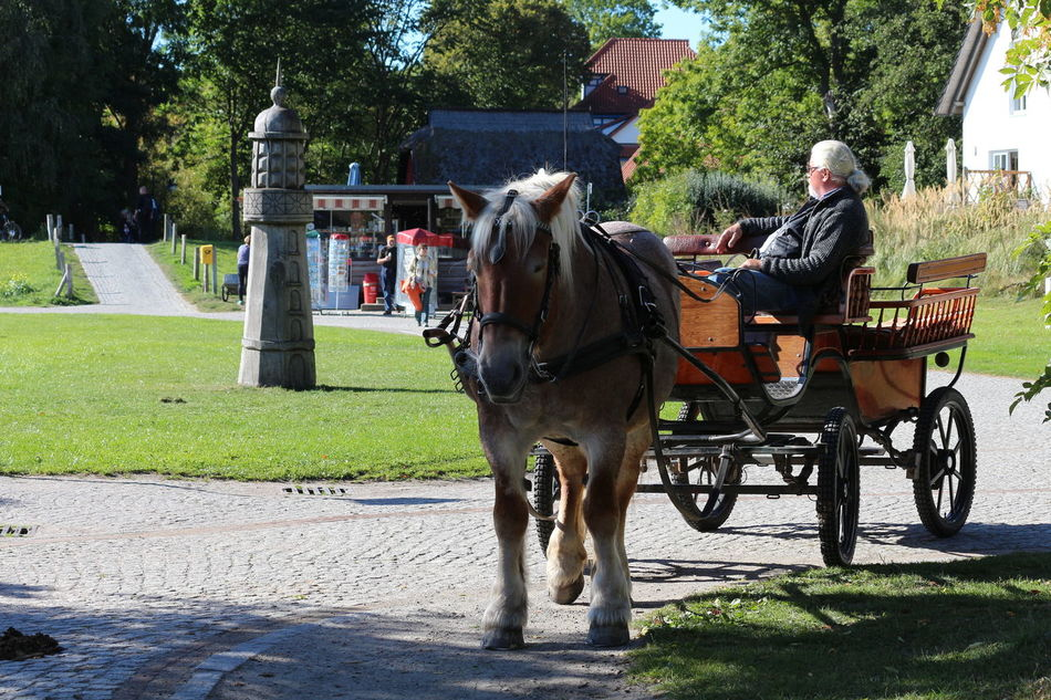 Animal Themes Couchman Full Length Horse Horse-drawn Carriage Idyllic Leisure Activity Lifestyles Riding Tree Working Animal