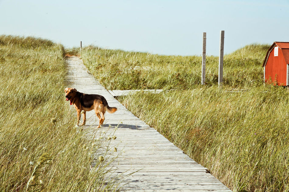 Beautiful stock photos of pets, Animal Themes, Barn, Boardwalk, Built Structure