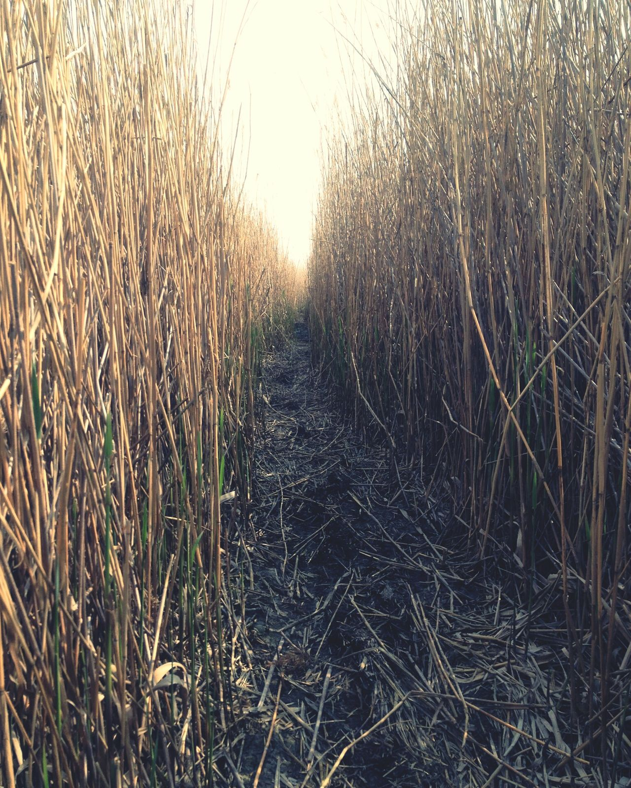 Path Pathway Pathways Paths Reeds Reed Freedom Freedoom  Free Time FreeTime Free Nature Naturelovers
