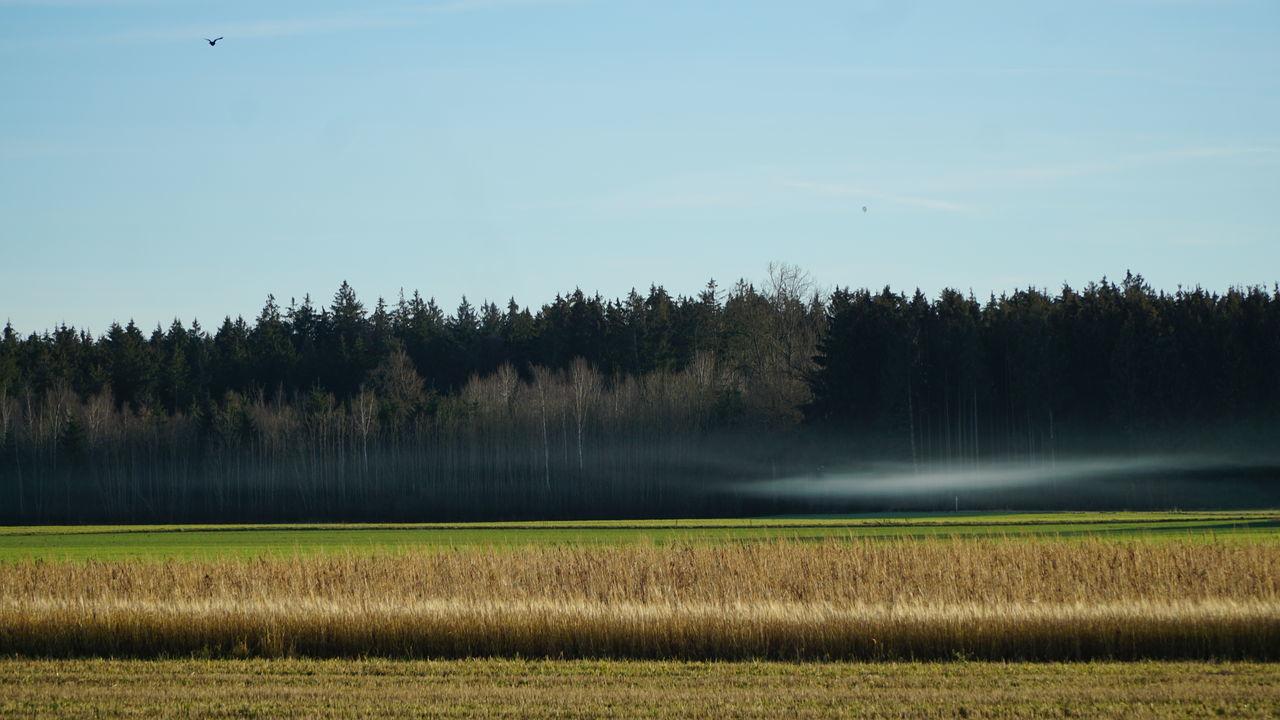 Bodennebel an einem Dezembertag Bodennebel Countryside Fields Fog Forest Nature Outdoors Tranquil Scene