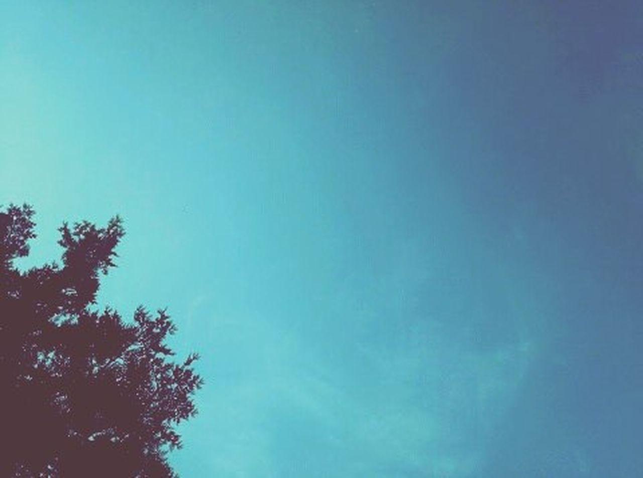 Just tried a strange filter. 100photos Ninetyth Sky Tree Minimal Strange Interesting Mobilephotography