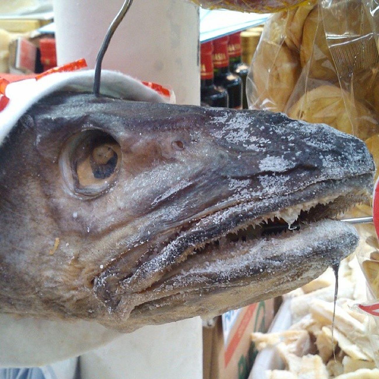 Olha cabeça de bacalhau.