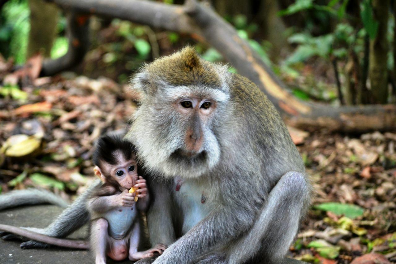 Beautiful stock photos of jungle, Animal, Animal Family, Baby, Care