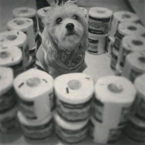 Dog Paper Rommie