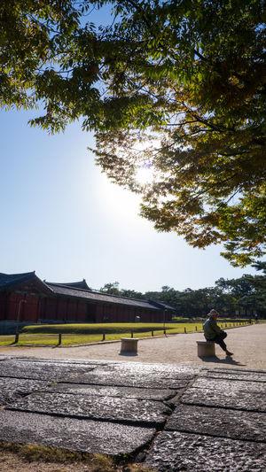 Alone Man Brick Floor Gyoeng Hui Palace, Seoul, Korea South Korea Sunset Tree Braches,