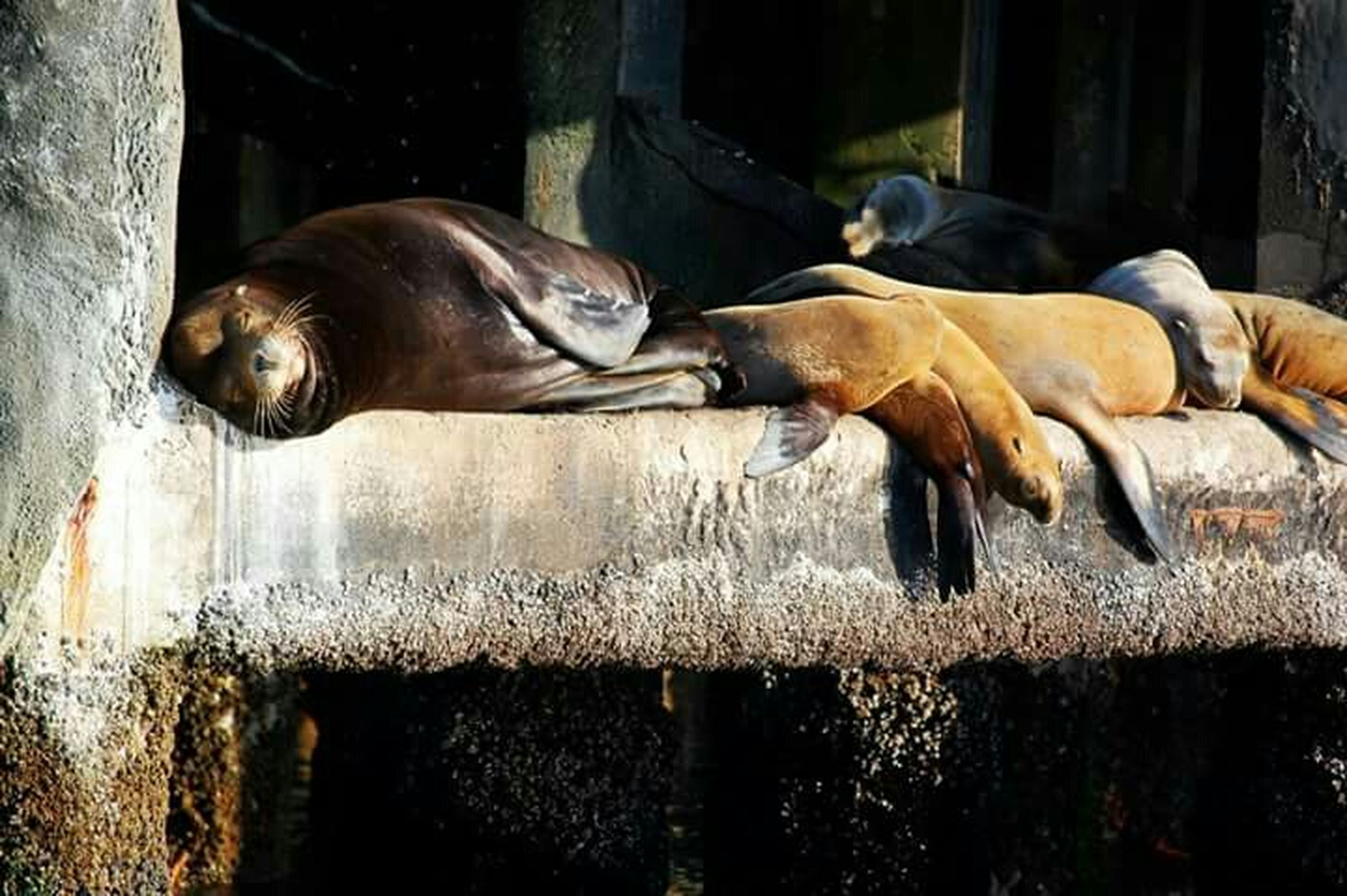 animal themes, domestic animals, mammal, livestock, horse, two animals, standing, full length, herbivorous, one animal, dog, togetherness, sunlight, day, outdoors, side view, working animal, zoology, sleeping, brown