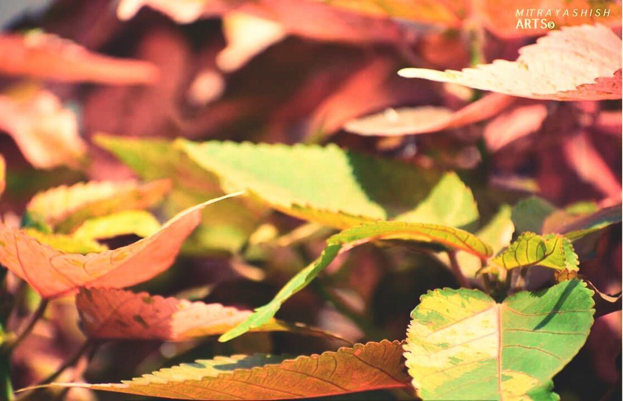 I feel addictive watcing this shot!Greenry Everywhere Mother Nature Beautiful Leaves MITRAYASHISHArts