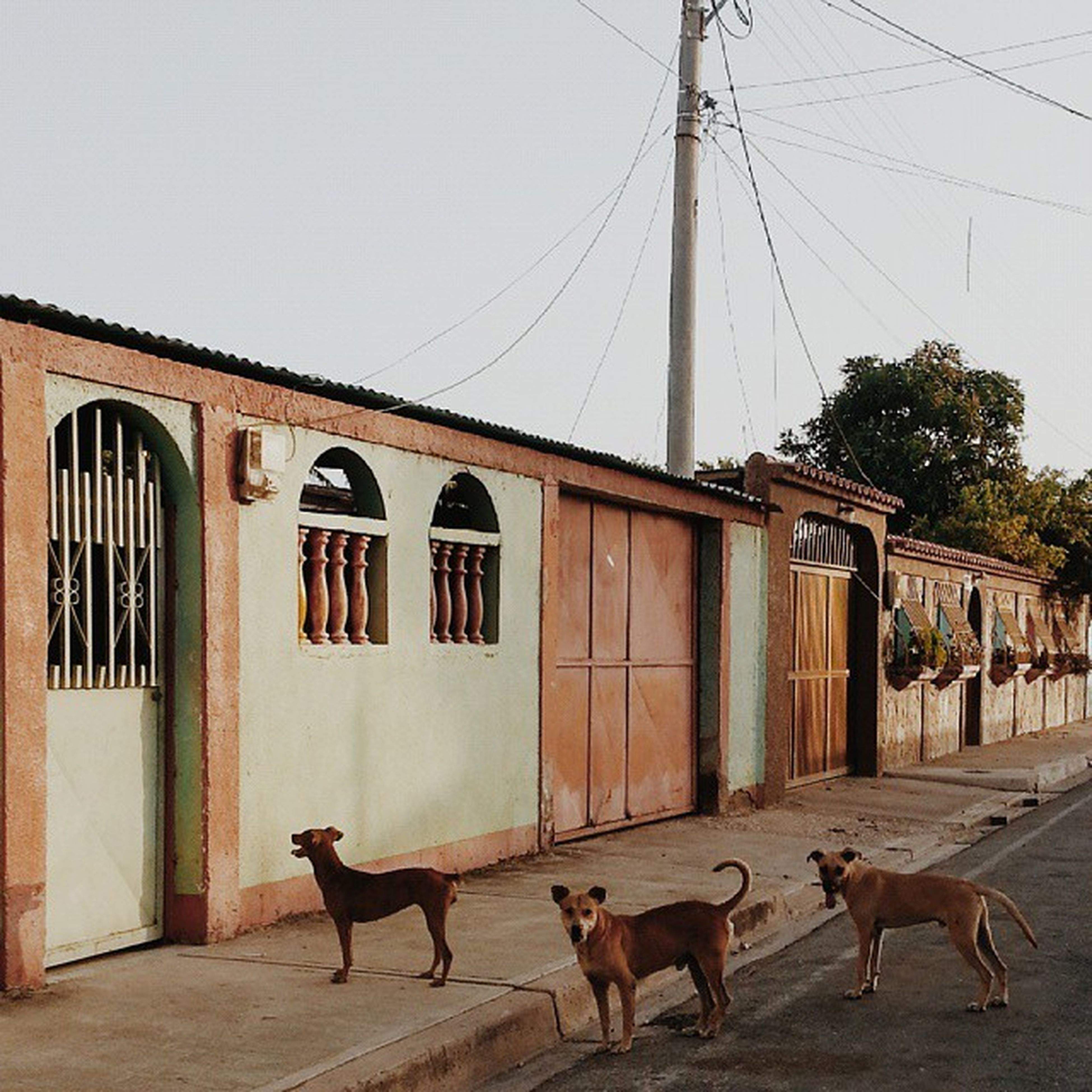 animal themes, domestic animals, building exterior, one animal, architecture, built structure, mammal, pets, clear sky, dog, street, two animals, house, outdoors, residential structure, day, full length, side view, walking, residential building