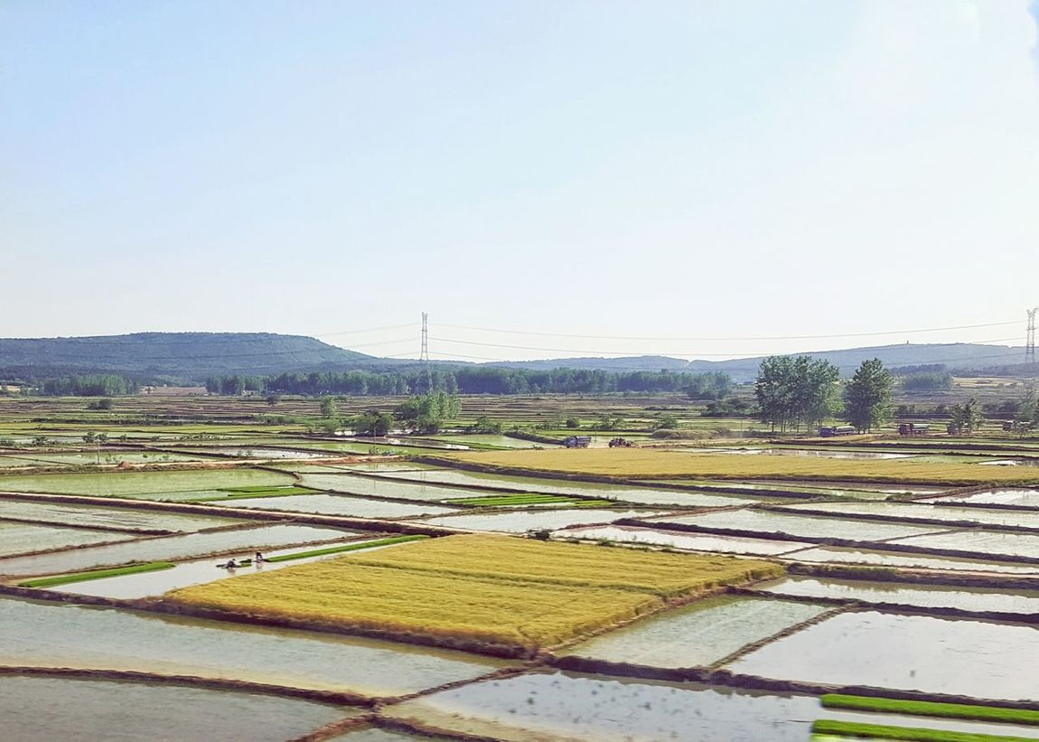 Chinese Landscape, Rice Fields