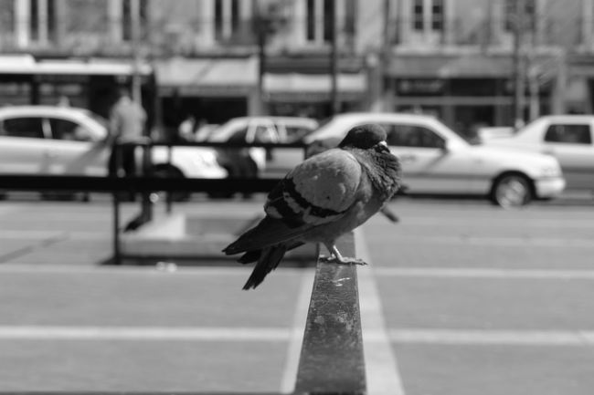 Animal Animal Themes Animals In The Wild Bird City Life Close-up Contemporary Focus On Foreground Full Length Lifestyles No People Occupation One Animal Perching Pigeon Selective Focus Side View Two Animals Urban Wildlife