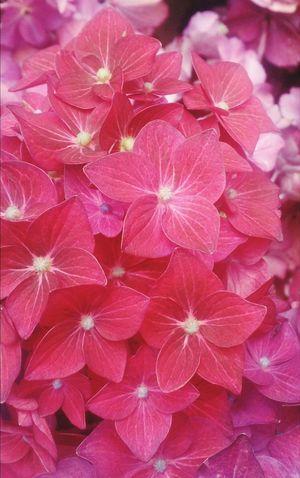 Этюд в розовых тонах. натюрморт цветы Still Life Flowers Close-up Nature Freshness Fragility No People