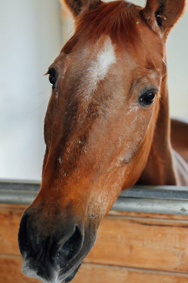 Animal Eye Animal Head  Animal Nose Horse Horse Head Horse Mane Mane No People