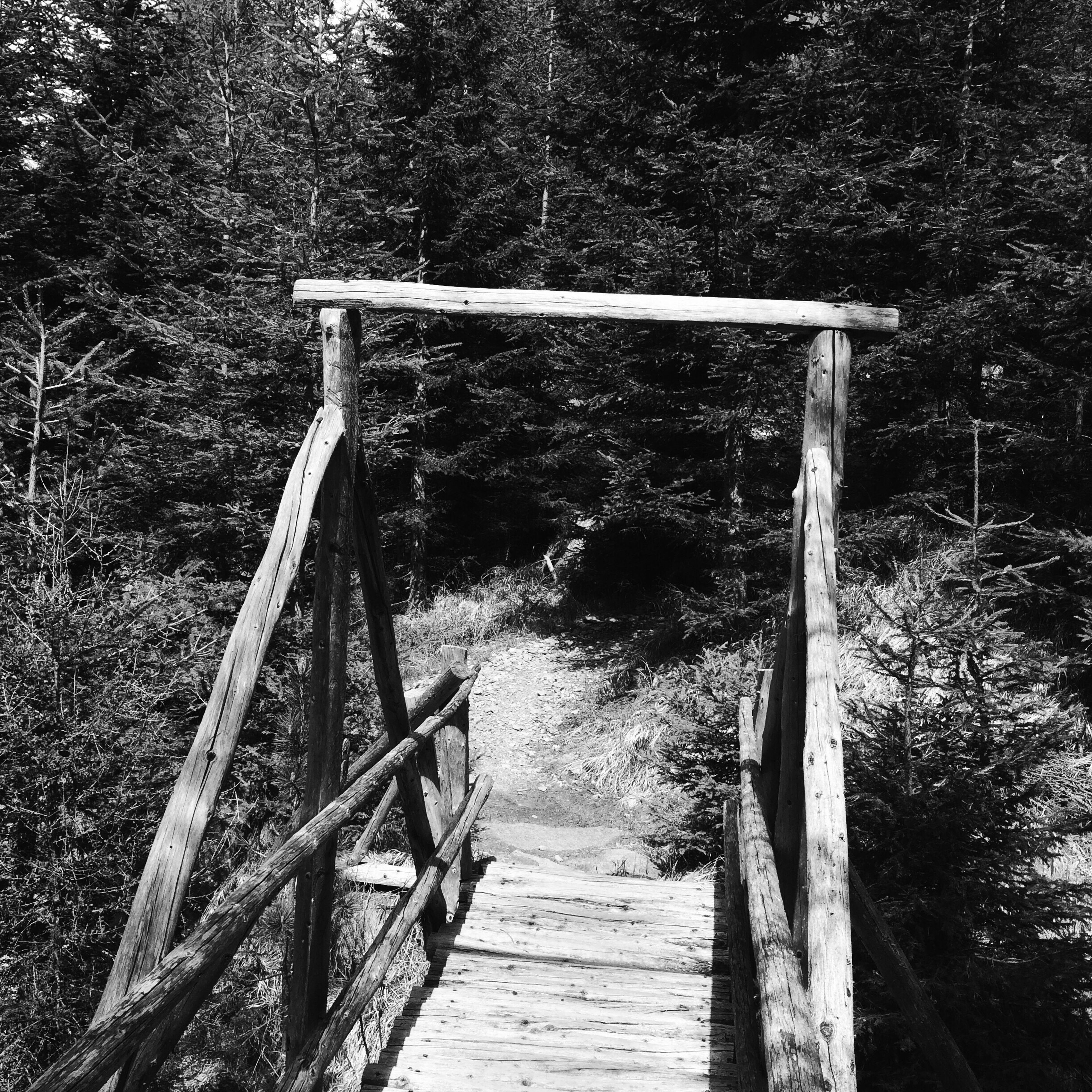 tree, wood - material, forest, railing, nature, day, outdoors, the way forward, no people, footbridge, beauty in nature, hand rail