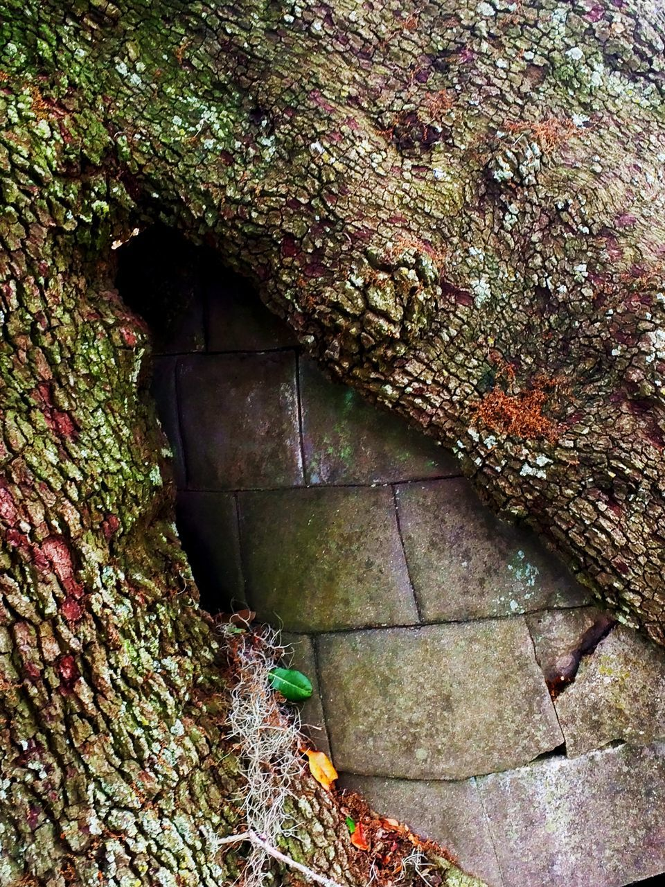 textured, day, no people, moss, tree trunk, outdoors, nature, close-up, tree