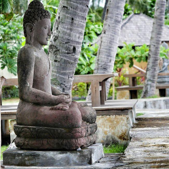Buddha Meditation Divingcentreseraya Savesharks savemantas