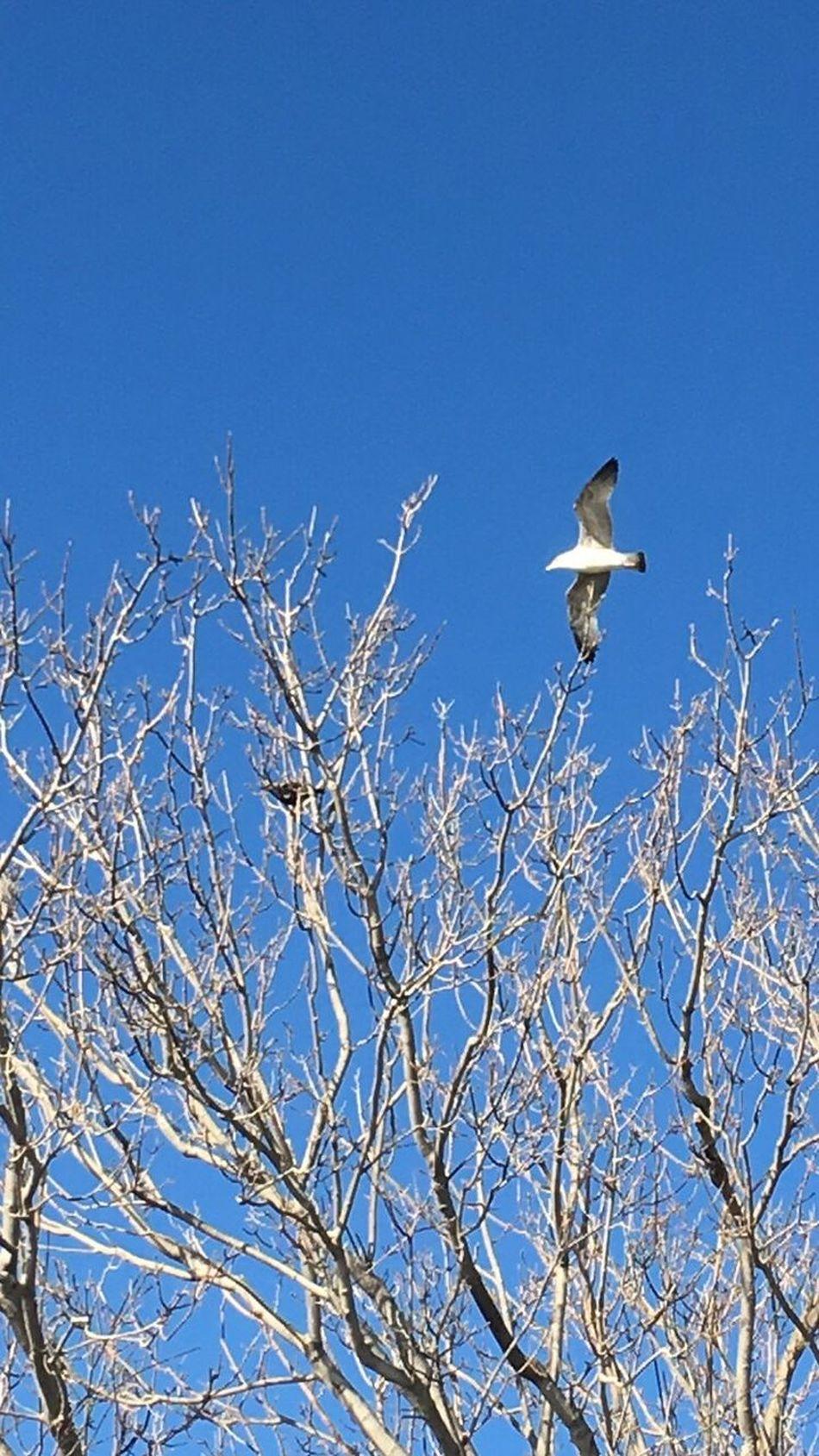 Bird Blue No People Nature Tree Beauty In Nature Sky Enjoying Life Photography Hello World Photoshoot Seagulls Hi! Beatiful Skyporn