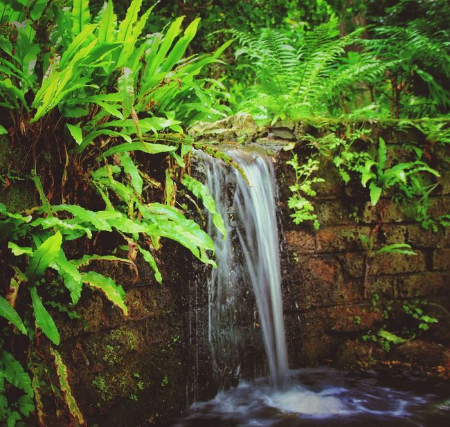 Outdoors Outdoor Photography Little Waterfall Plants Water Water_collection Water And Nature Mothernature Popular EyeEm Nature Lover Canon_photos Canon600D Canonphotography Canon_official Eyemphotography EyeEm EyeEm Awards 2016 EyeEm Team ExpressYourself Photography Smooth Eye4photography  My Point Of View June 2016