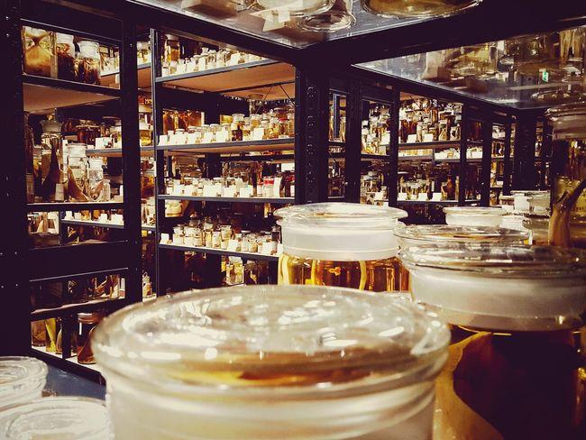 Everything In Its Place Berlin Berlinstagram Naturkundemuseum Berlin  Präparate Regale