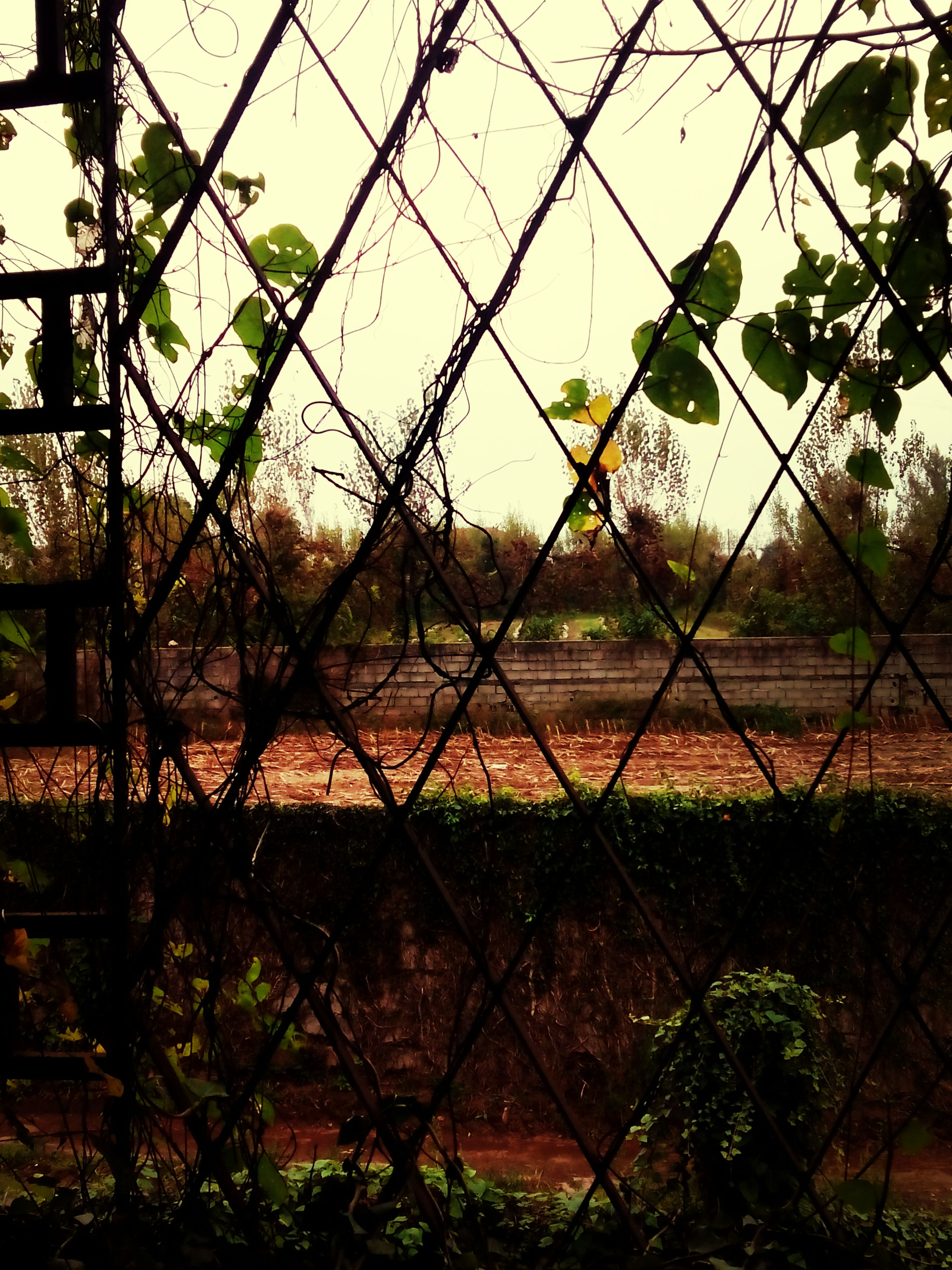 fence, protection, safety, chainlink fence, security, field, tranquility, sky, landscape, tranquil scene, tree, grass, metal, nature, growth, scenics, beauty in nature, plant, no people, green color