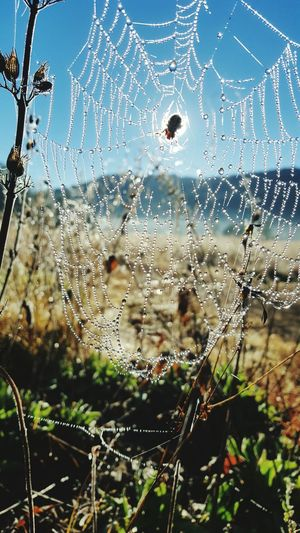 Araña y Frio Outdoors Spider Web Drop Water Close-up Focus On Foreground Fragility Wet No People Nature Droplet Day Web Beauty In Nature Sky Freshness First Eyeem Photo