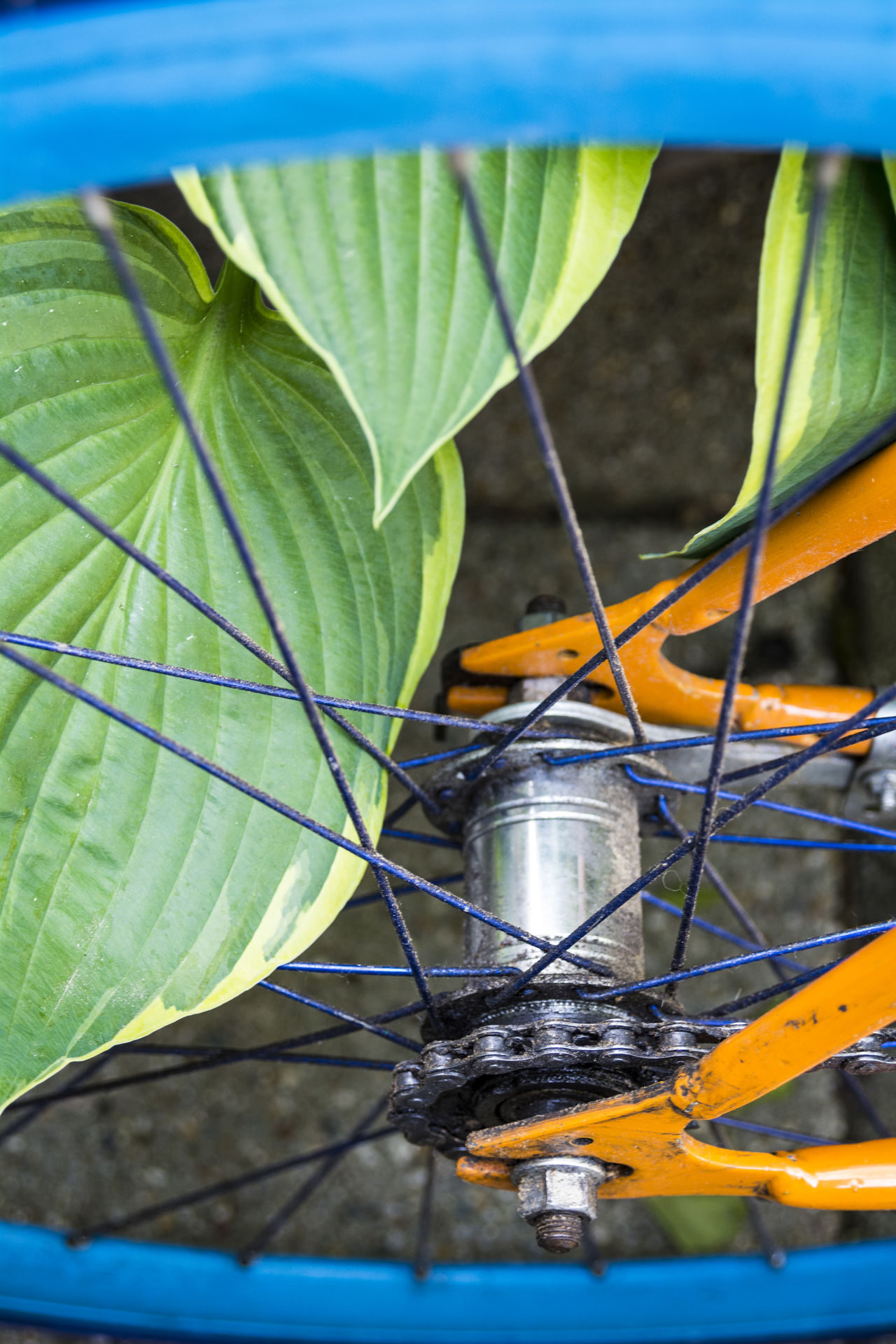 Beauty In Nature Bicicletta Bicycle Bike Blue Chain Close-up Day Enviroment Enviromental Friendly Green Color Gritty Growth Human Transportation Leaf Nature No People Orange Outdoors Outside Plant Spokes Transportation Water Wheel