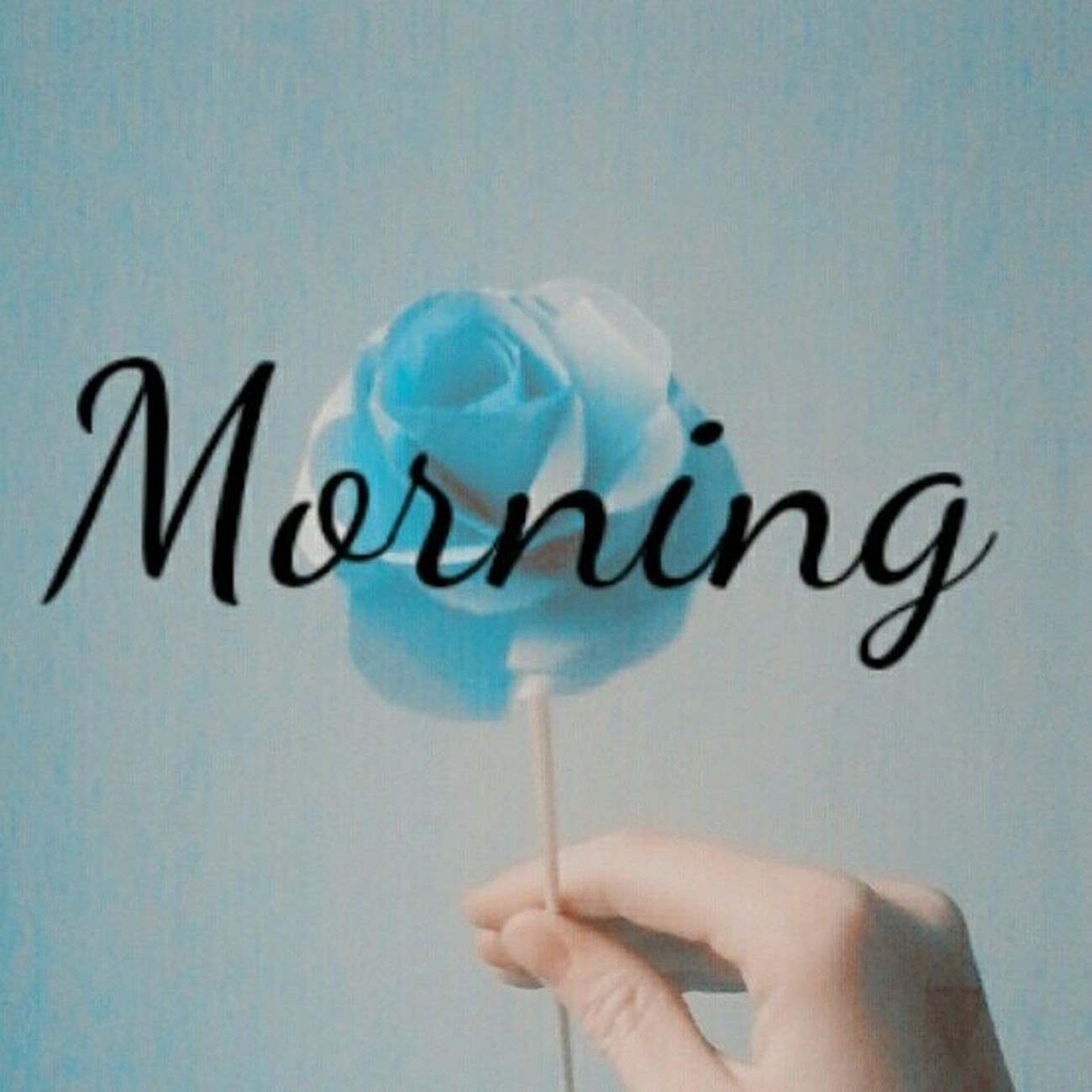 Text Flower Paper Flower Paper Morning No Animals Human Hand