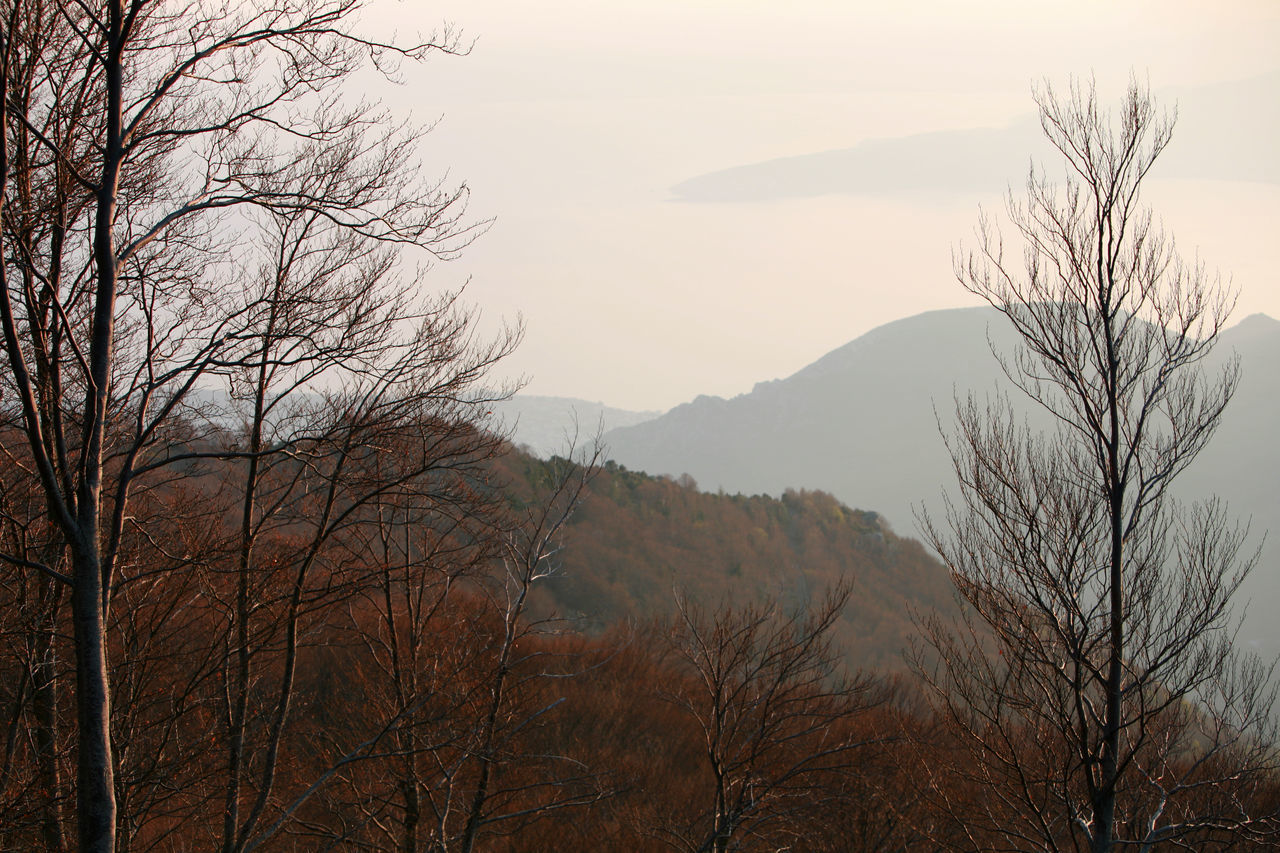 Autumn Branch Branches And Sky Forest Greece Horizon Landscape Mountains Nature Sea Sky Tree