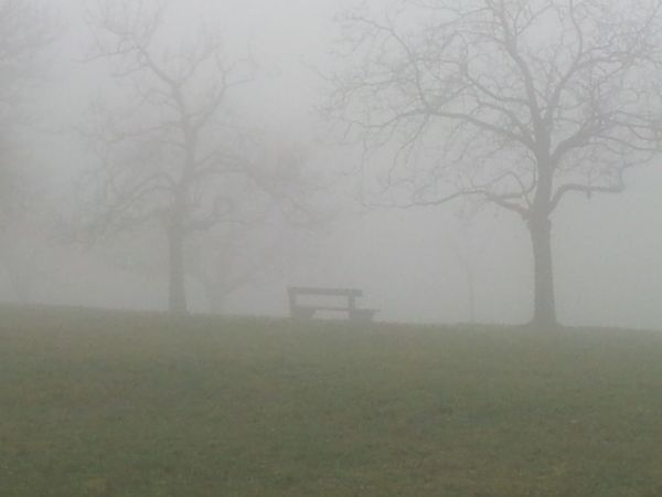 Fog Tree Weather Landscape Foggy No People Tranquility Outdoors Day Grass Cold Temperature Nature Winter Beauty In Nature Bench No Filter, No Edit, Just Photography No Filter NoEditNoFilter Nofilter