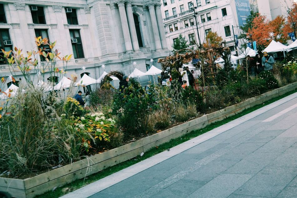 Fall beauty in Dilworth Park, Philadelphia Architecture Building Exterior Built Structure Christmas Christmas Decorations Christmas Lights City Day Fall Beauty Fall Days Fall Decorations Growth Nature No People Outdoors Plant Tree