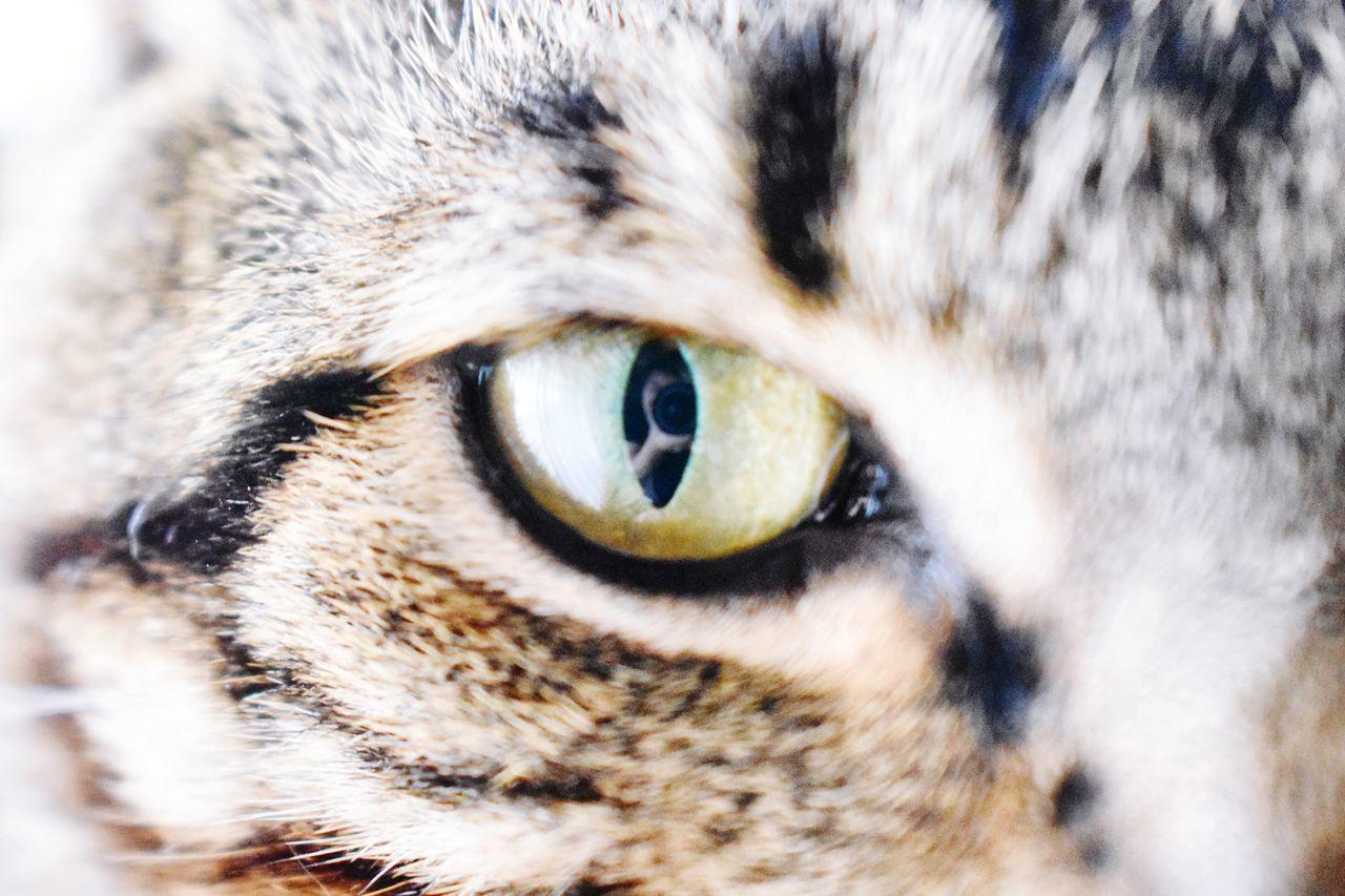 Eyeofthetiger Cat Young Beginnerphotographer Beginning