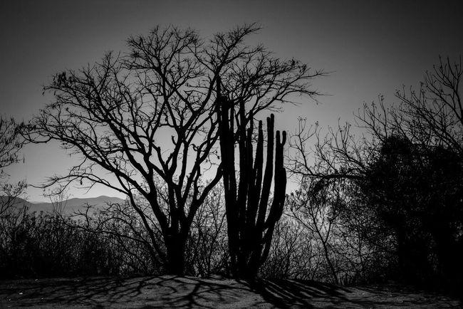 Mexico Oaxaca Blackandwhite Monte Alban Trees Cactus