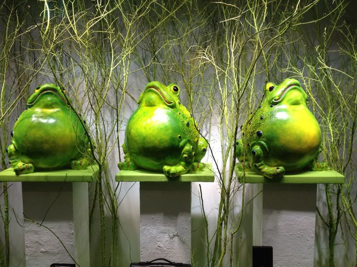Displaywindow Friends Frog Frogs Frosch Schaufenster Schaufensterdeko Schaufensterdeko Aus Der Hölle Shopwindow WindowDressing