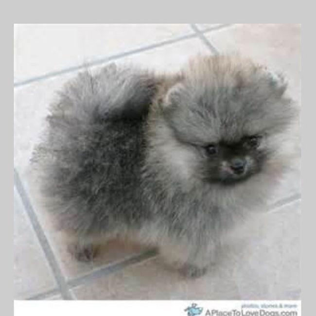 Puppy I Want