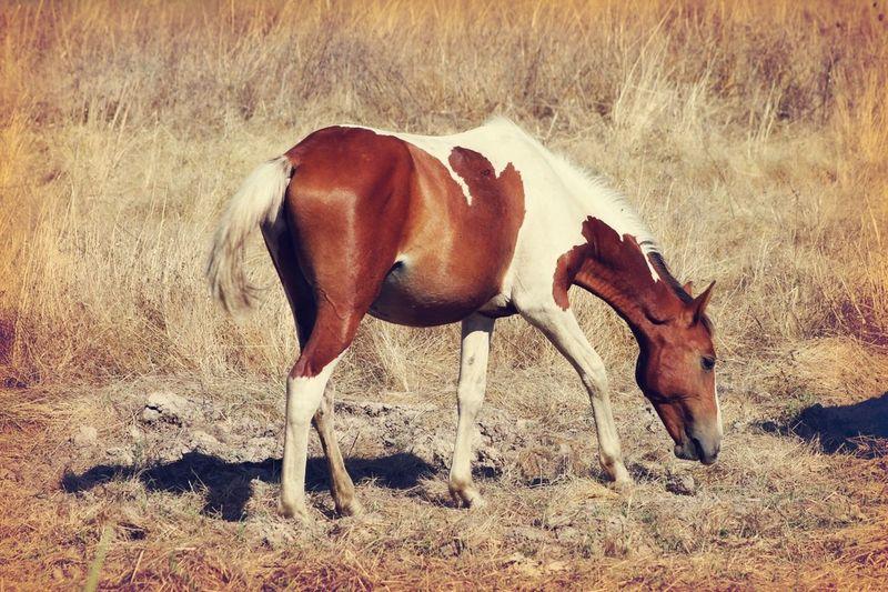 Animal Photography Portugal_em_fotos Horses