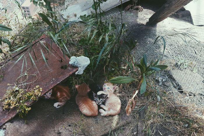 Cats Of EyeEm Cuttie HappySaturday Blue 😚