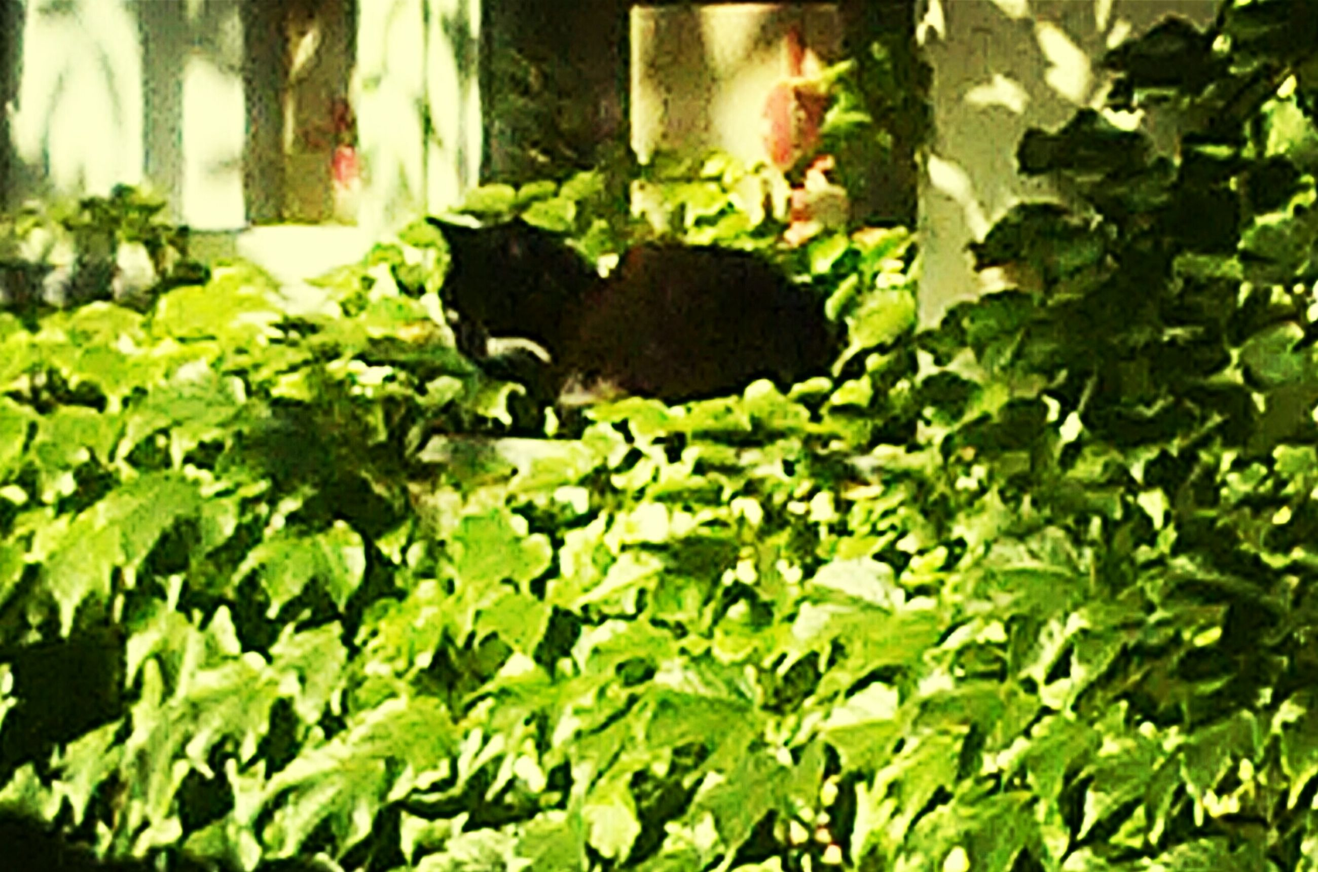 animal themes, plant, one animal, green color, growth, leaf, pets, domestic animals, nature, domestic cat, potted plant, cat, no people, mammal, day, front or back yard, wildlife, outdoors, bird, high angle view
