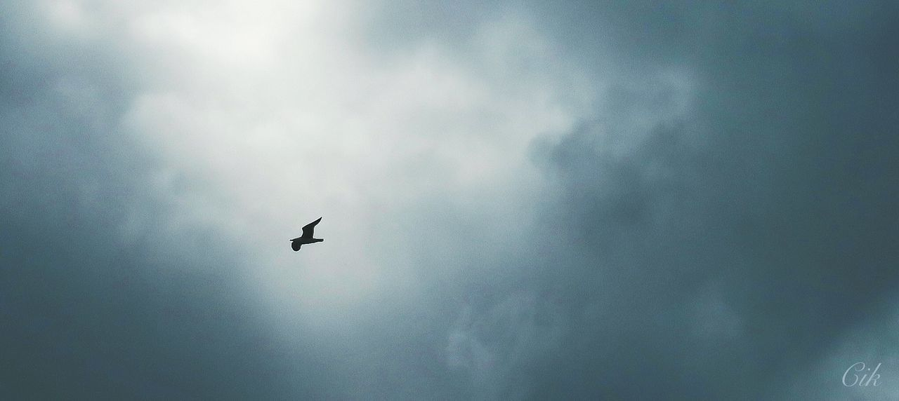 flying, low angle view, sky, mid-air, day, outdoors, cloud - sky, no people, animals in the wild, nature, bird, animal themes, beauty in nature
