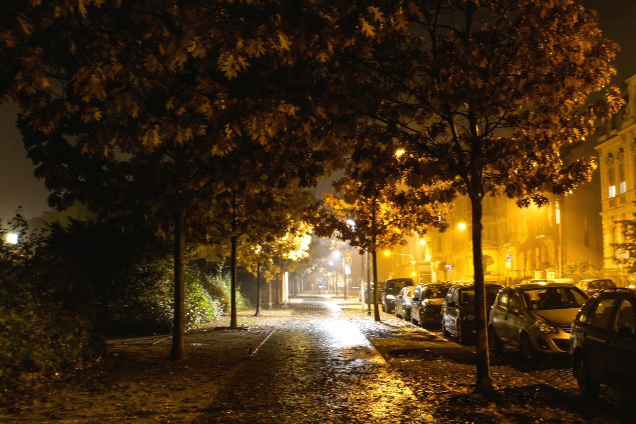 Tree Outdoors No People Growth City Nature Scenics Beauty In Nature Sky Day Night Nightphotography Wanderlust VSCO Capturing Freedom Urban Landscape City Autumn