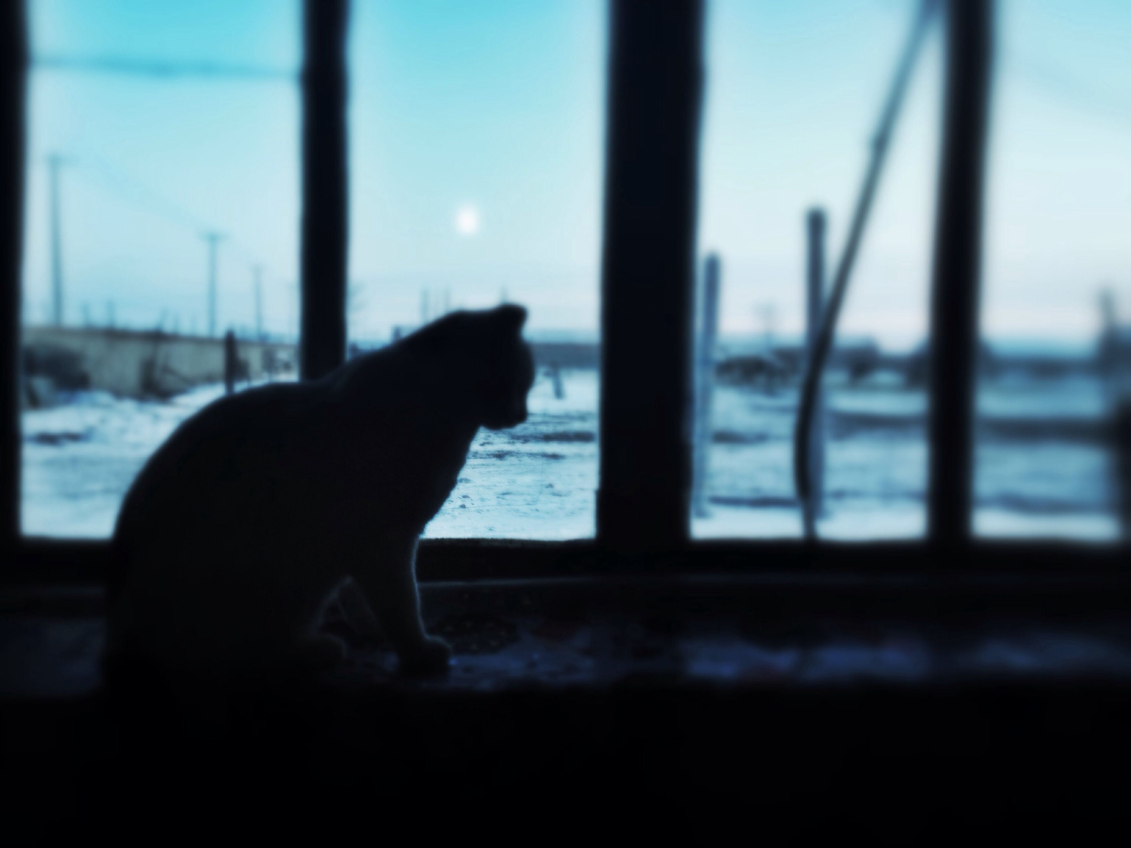 one animal, animal themes, pets, domestic animals, mammal, window, dog, indoors, transparent, looking through window, glass - material, sky, domestic cat, relaxation, focus on foreground, sitting, rear view, part of