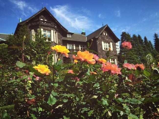 秋バラの旧古河庭園