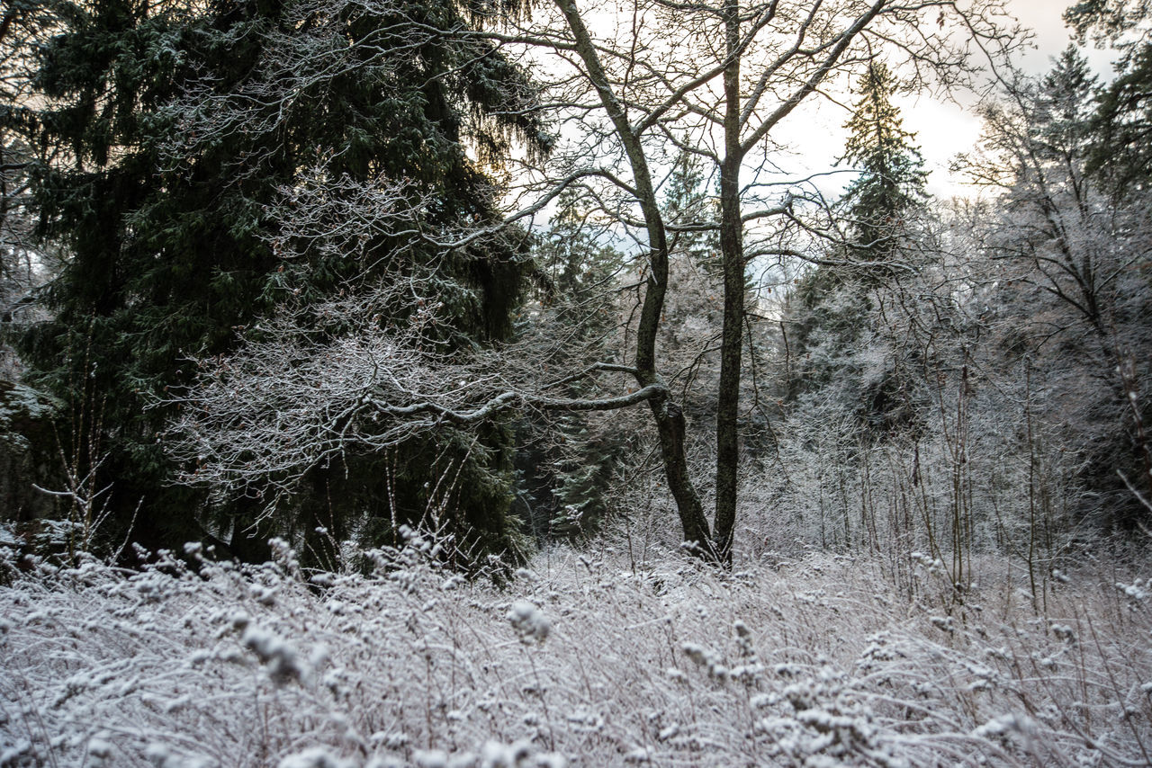 Mon Repos (Vyborg) https://en.wikipedia.org/wiki/Mon_Repos_(Vyborg) Bare Tree Beauty In Nature Branch Day Forest Landscape Nature No People Outdoors Scenics Sky Tranquil Scene Tranquility Tree Winter Wintertime Woods