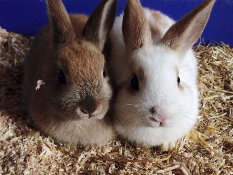 new bunnies Pets Enjoying Life