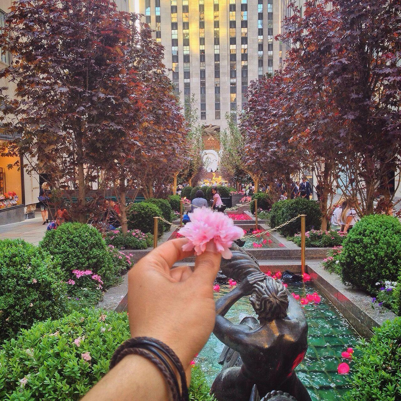 Pink Flower Flowers Rockerfellercenter NYC NYC Photography Rockerfeller Newyork New York New York City Flower