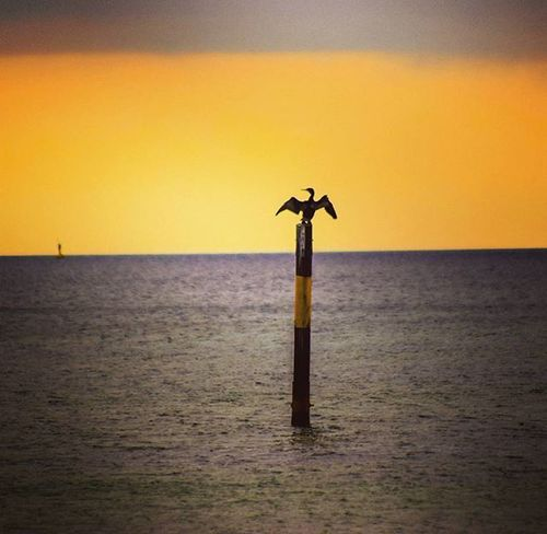 Todays sunset ❤ Kormoran Sunset Sonnenuntergang Bird Sun Ruegen Balticsea Baltic Ostsee Insel Team_photunique Sonne Sonnenuntergang Home Heimat