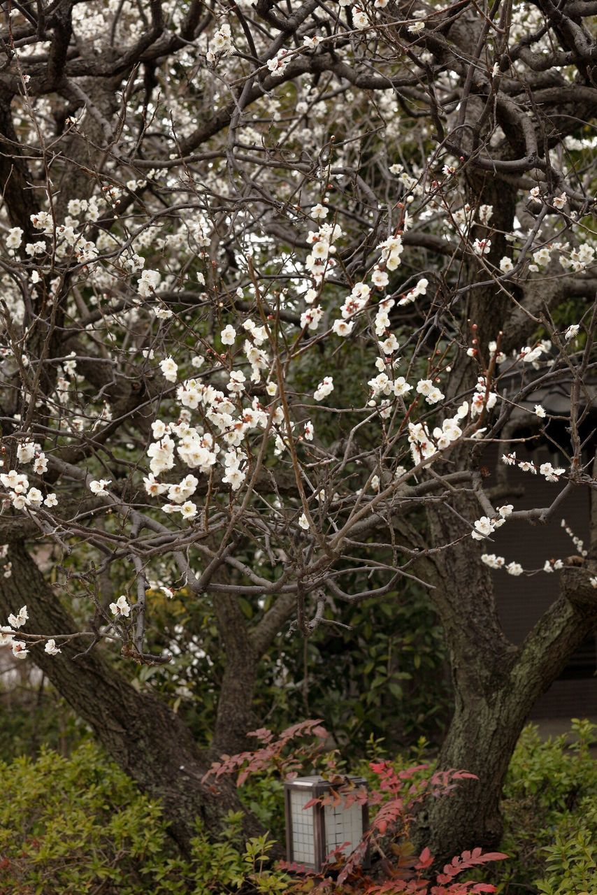 tree, flower, branch, blossom, growth, no people, nature, springtime, day, outdoors, freshness, beauty in nature, fragility, close-up