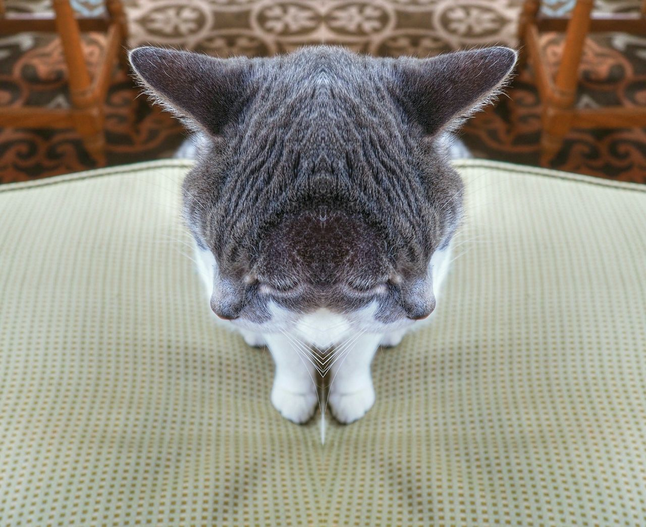 What is your feeling..? Separation Cat Fealings Mirror Effect Taking Photos Check This Out Creative