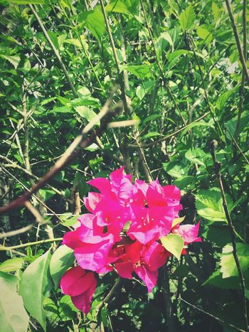 Nature Pink Color Beauty In Nature Leaf Growth Outdoors Day Green Color Plant Fragility Flower No People Flower Head Branch Freshness Tree Blooming Close-up