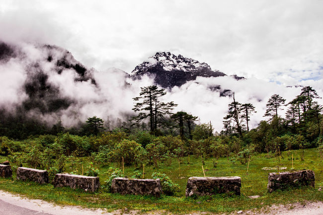Tree Tranquil Scene Tranquility Landscape Sky Cloud - Sky Scenics Non-urban Scene Travel Destinations Cloud Growth Beauty In Nature Day Nature Solitude Outdoors Tourism Green Color Cloudy Majestic Mountains In Background Roadtrip Mountainscape Himalayas Gangtok
